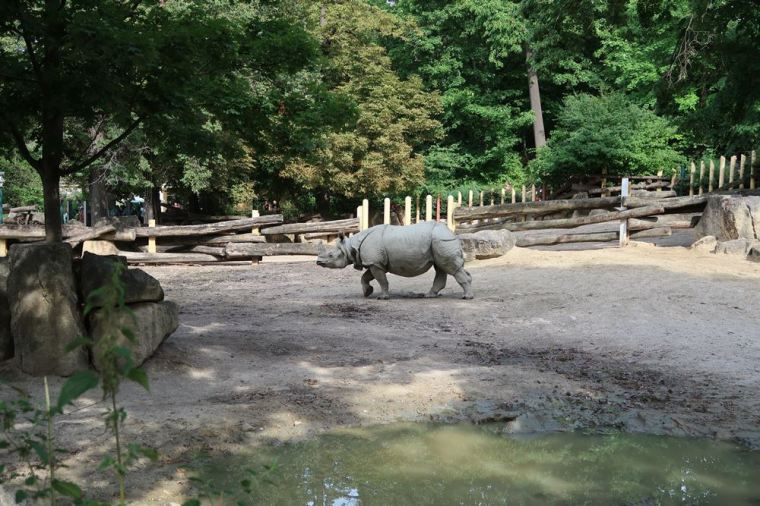 schonbrunn zoo-bluestellar (1)