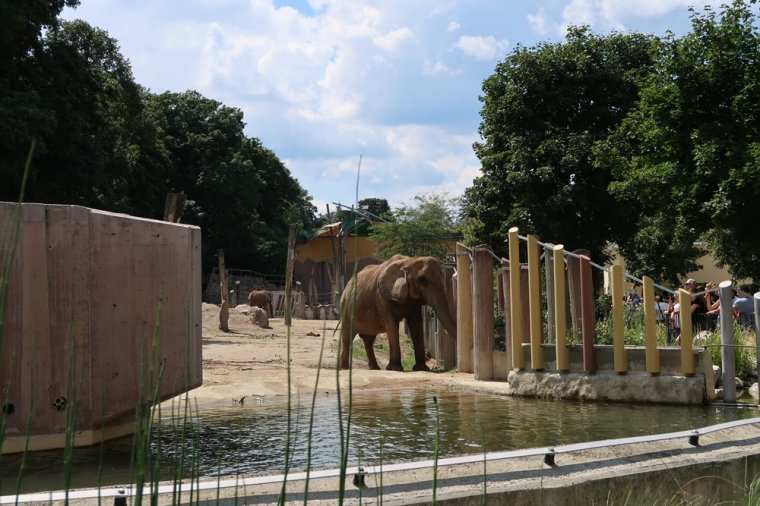 schonbrunn zoo-bluestellar (6)